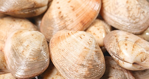 clams, preserving, pressure canner